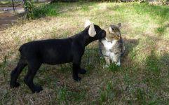 Соня! Первое знакомство с кошкой Нани 20012г